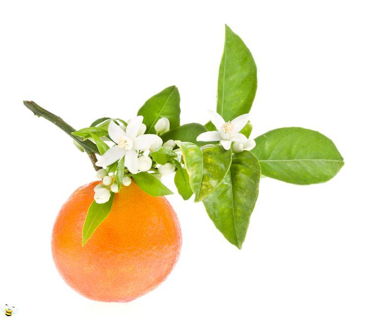 Narancsvirág